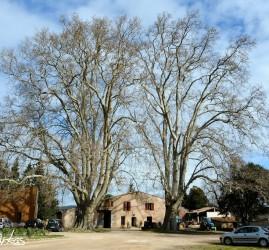 Visite du Domaine la Gayolle
