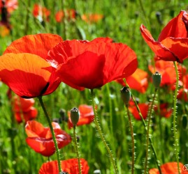 Flower by Olivier